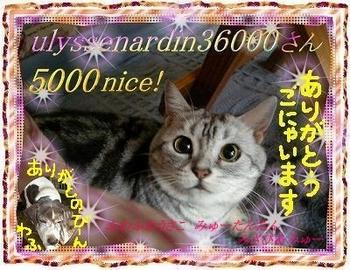 5000ulyssenardin36000-san.jpg